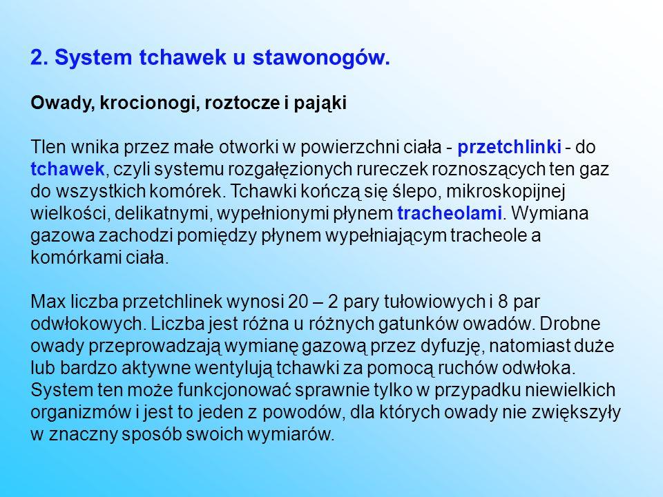 2. System tchawek u stawonogów.