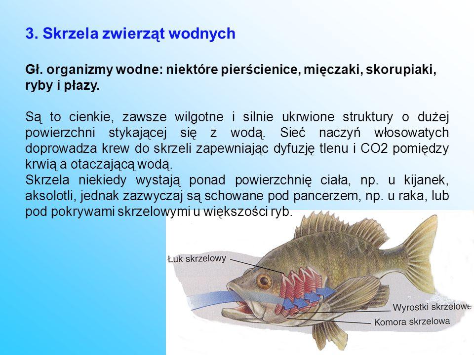 3. Skrzela zwierząt wodnych