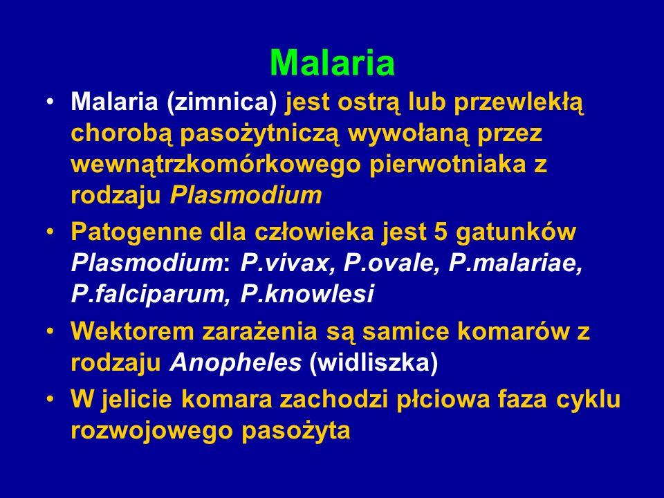 MalariaMalaria (zimnica) jest ostrą lub przewlekłą chorobą pasożytniczą wywołaną przez wewnątrzkomórkowego pierwotniaka z rodzaju Plasmodium.