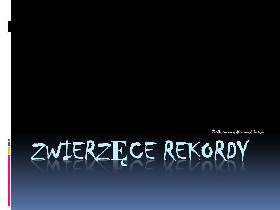 Źródła: Google Grafika i www.ekologia.pl