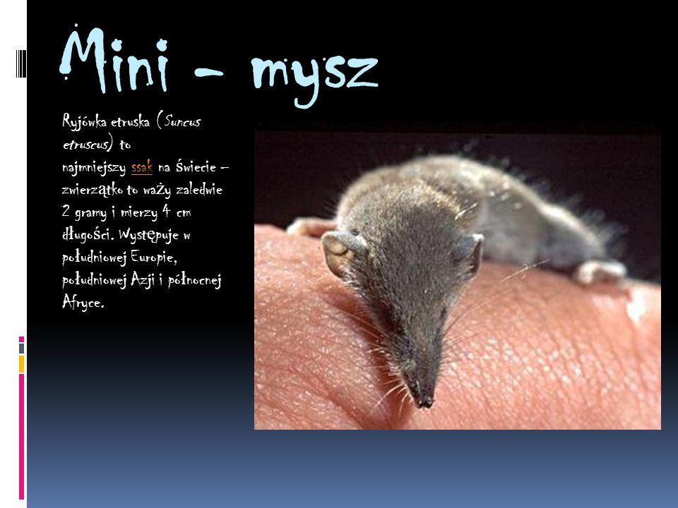 Mini - mysz