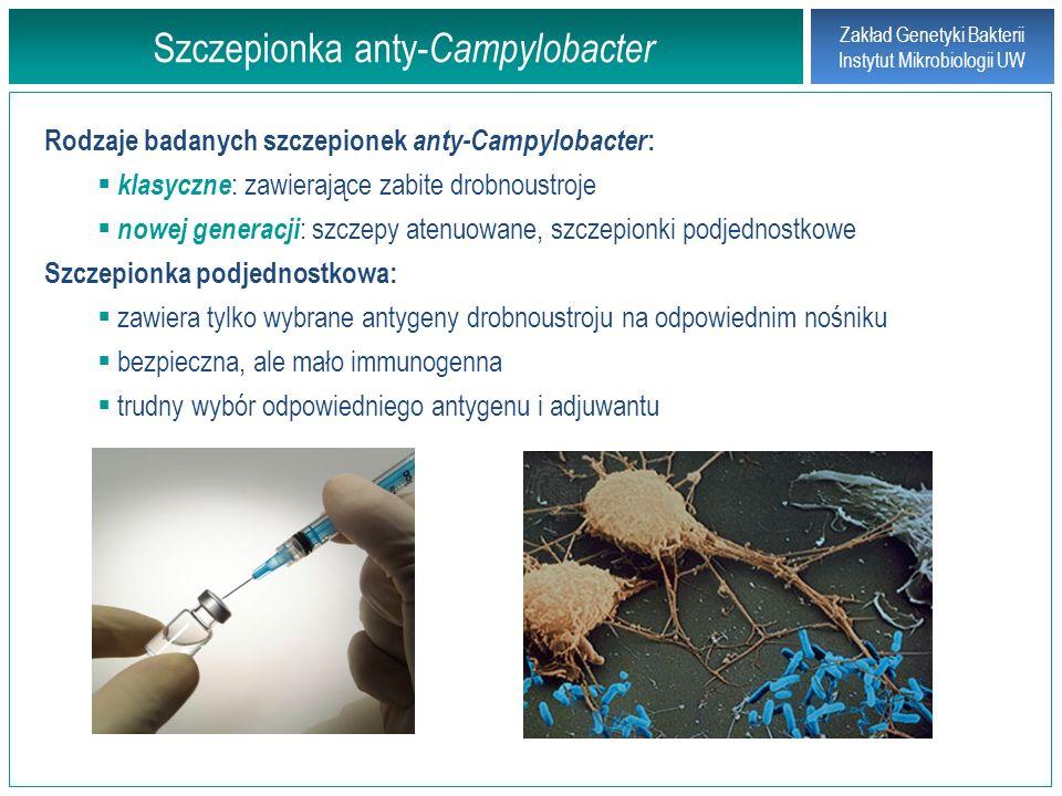Szczepionka anty-Campylobacter