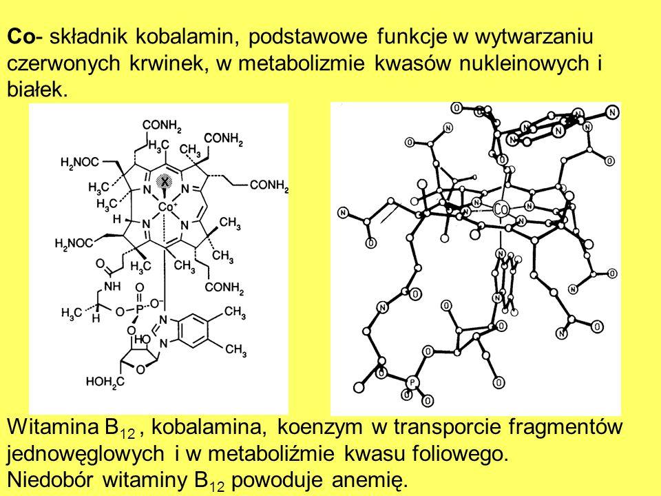 Co- składnik kobalamin, podstawowe funkcje w wytwarzaniu czerwonych krwinek, w metabolizmie kwasów nukleinowych i białek.