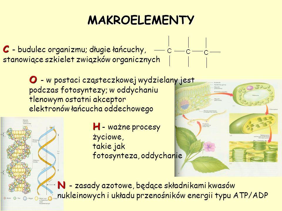 MAKROELEMENTY C - budulec organizmu; długie łańcuchy,