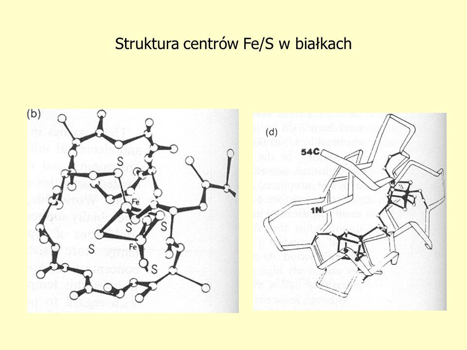 Struktura centrów Fe/S w białkach
