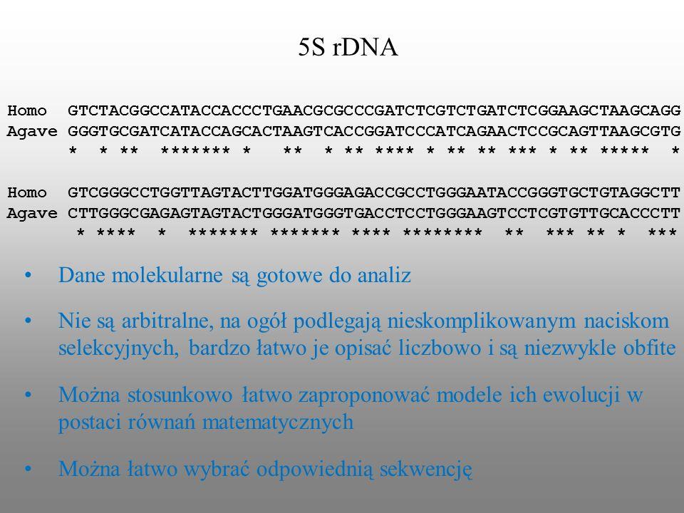5S rDNA Dane molekularne są gotowe do analiz
