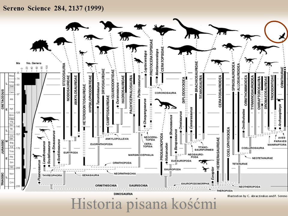 Historia pisana kośćmi