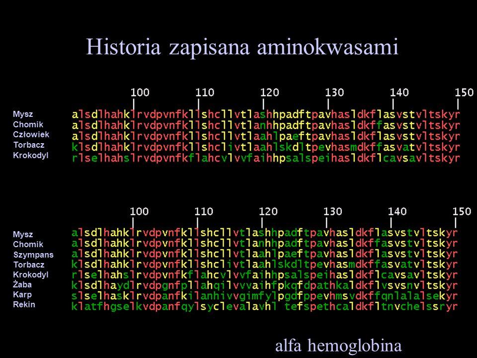 Historia zapisana aminokwasami