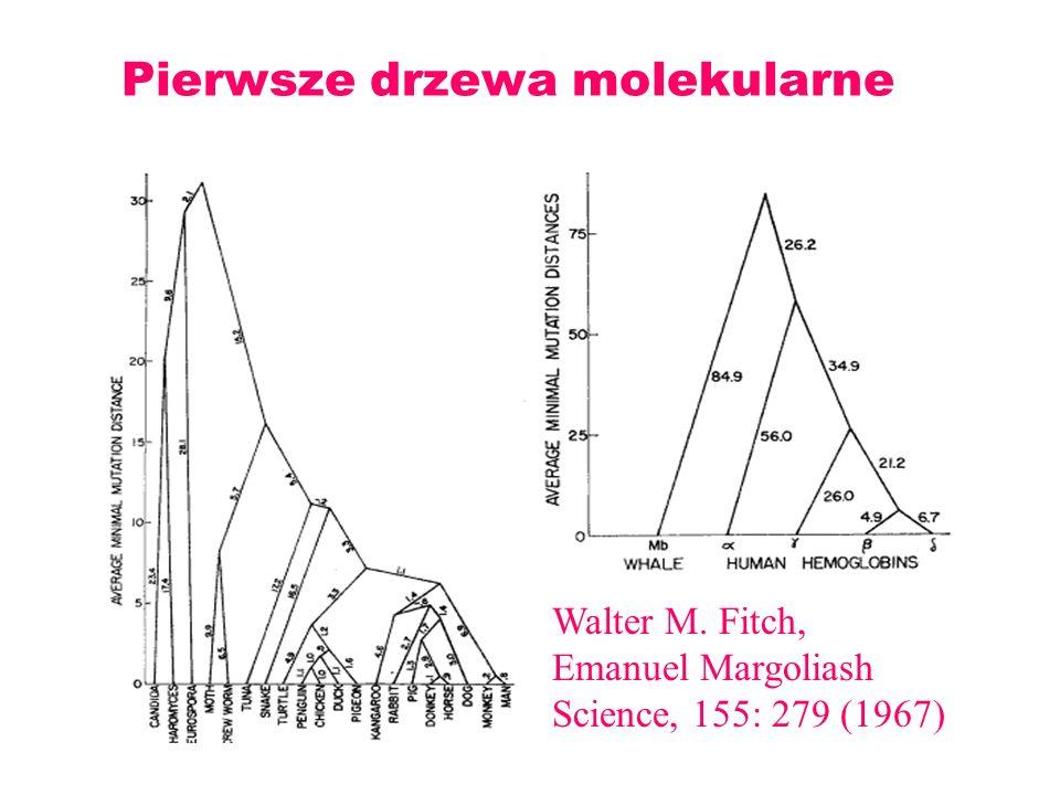 Pierwsze drzewa molekularne