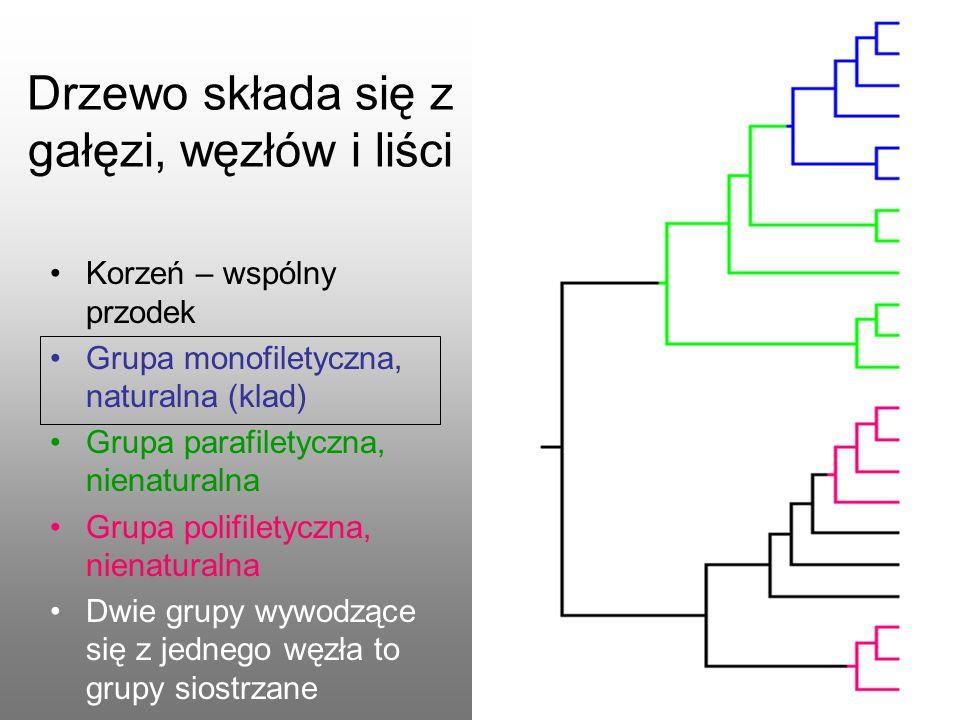 Drzewo składa się z gałęzi, węzłów i liści