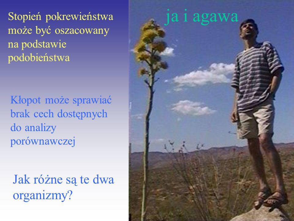 ja i agawa Jak różne są te dwa organizmy