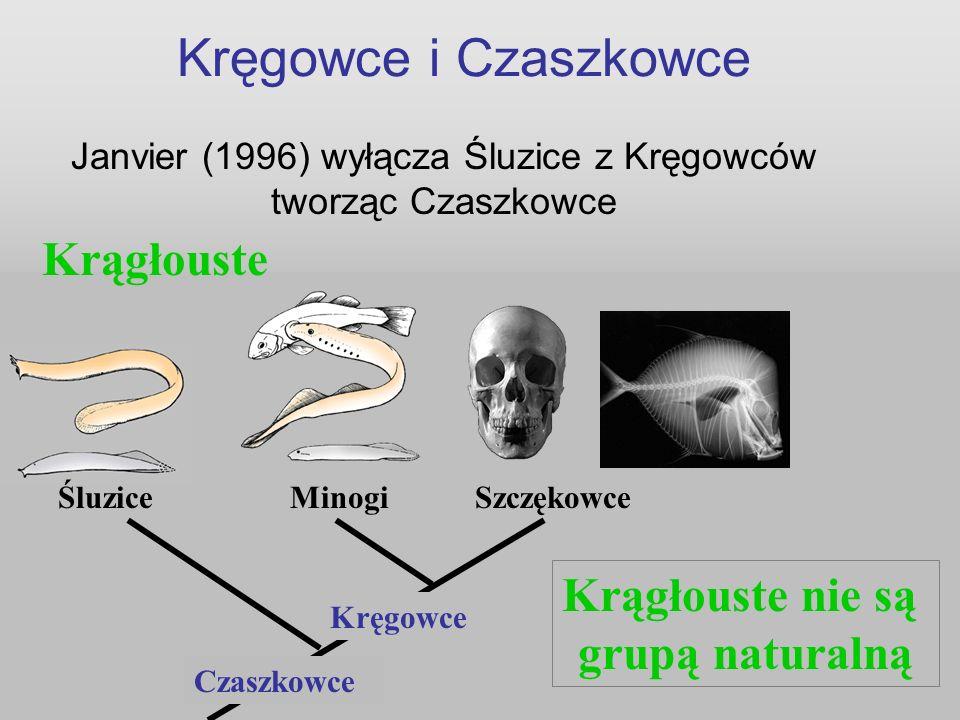 Janvier (1996) wyłącza Śluzice z Kręgowców tworząc Czaszkowce