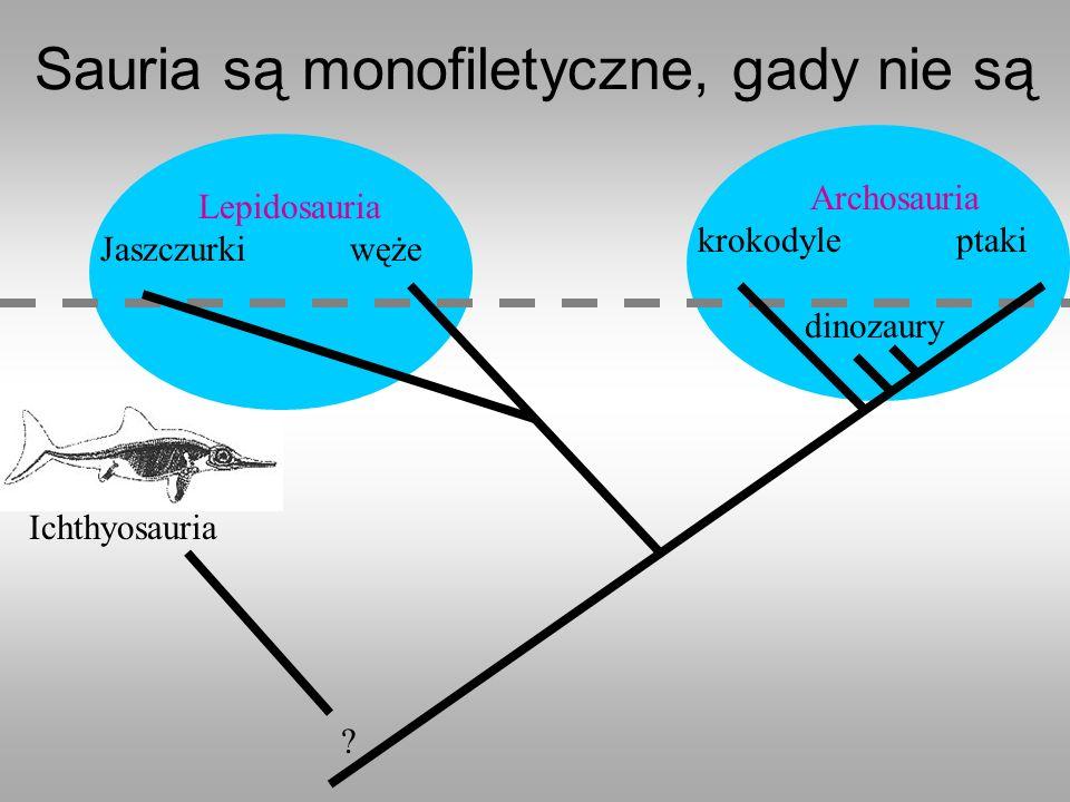 Sauria są monofiletyczne, gady nie są