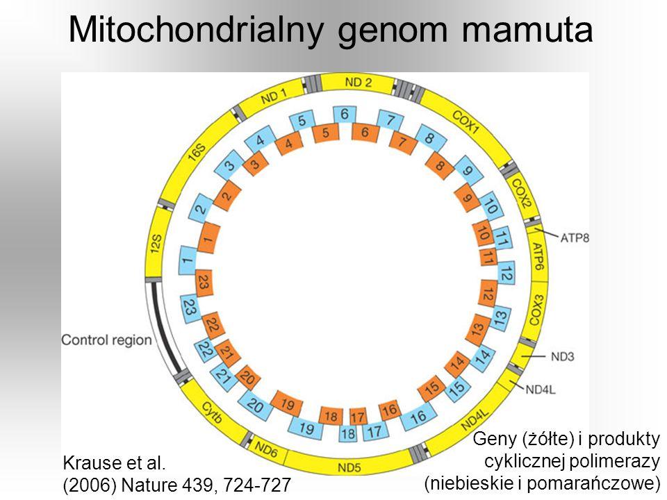 Mitochondrialny genom mamuta