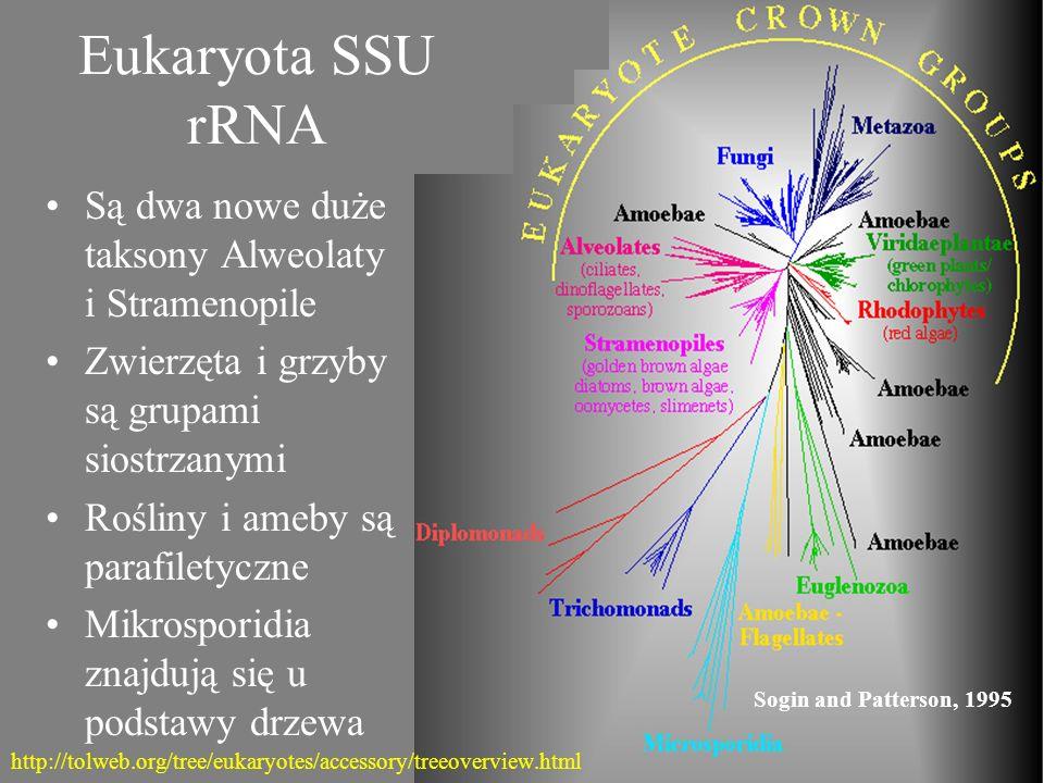 Eukaryota SSU rRNA Są dwa nowe duże taksony Alweolaty i Stramenopile