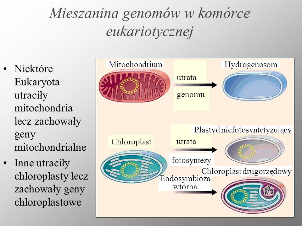 Mieszanina genomów w komórce eukariotycznej