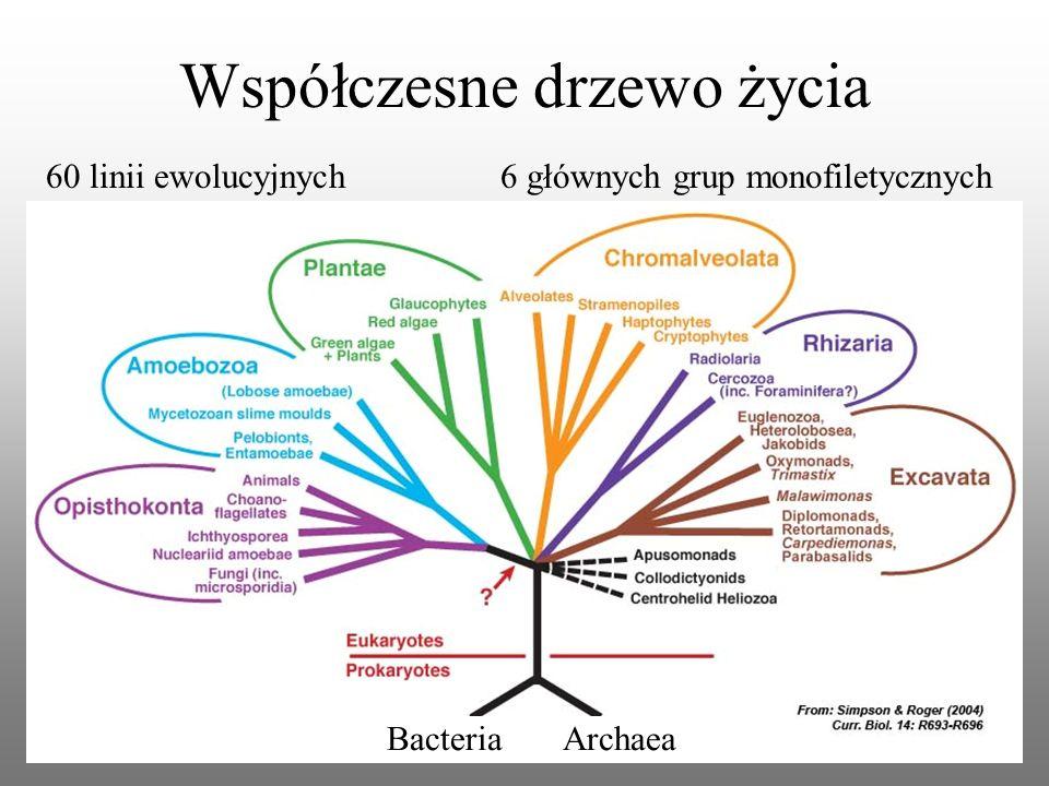 Współczesne drzewo życia