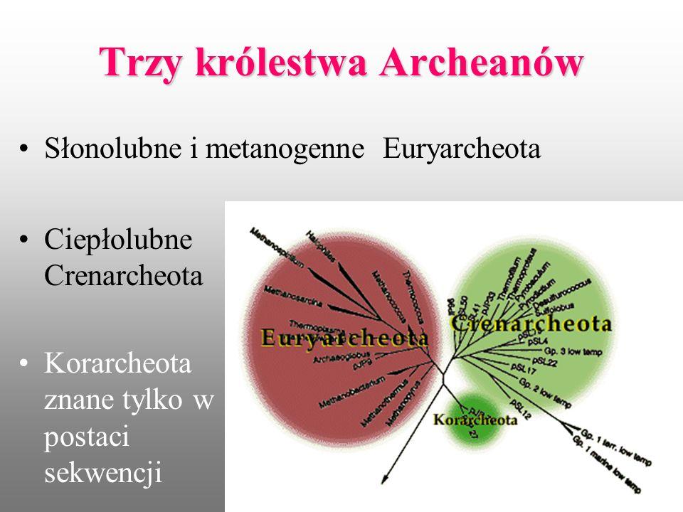 Trzy królestwa Archeanów
