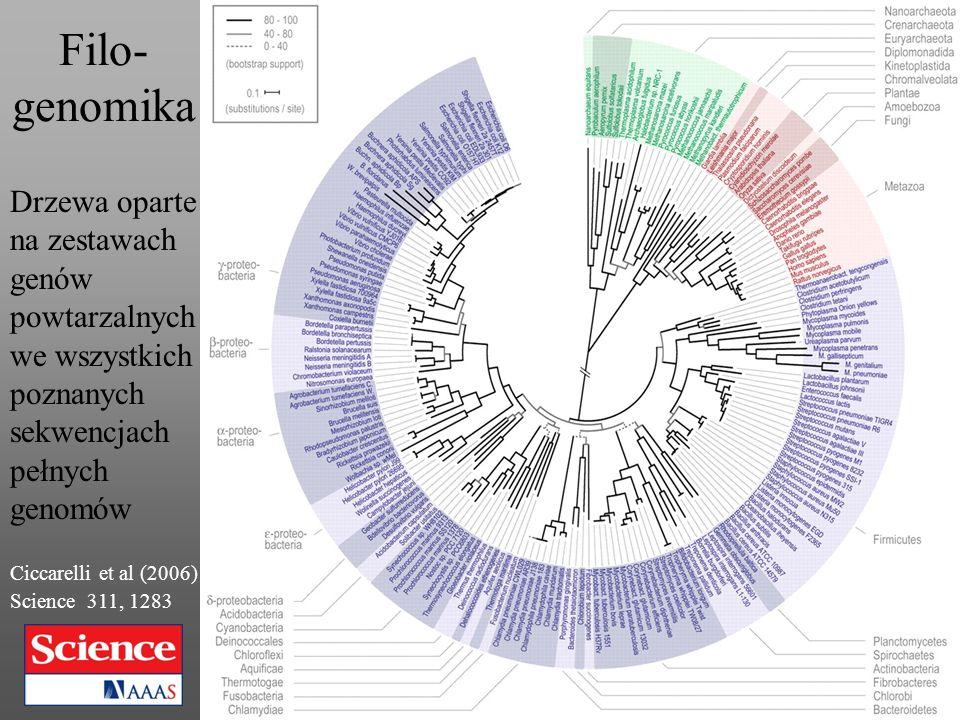 Filo-genomika Drzewa oparte na zestawach genów powtarzalnych we wszystkich poznanych sekwencjach pełnych genomów.
