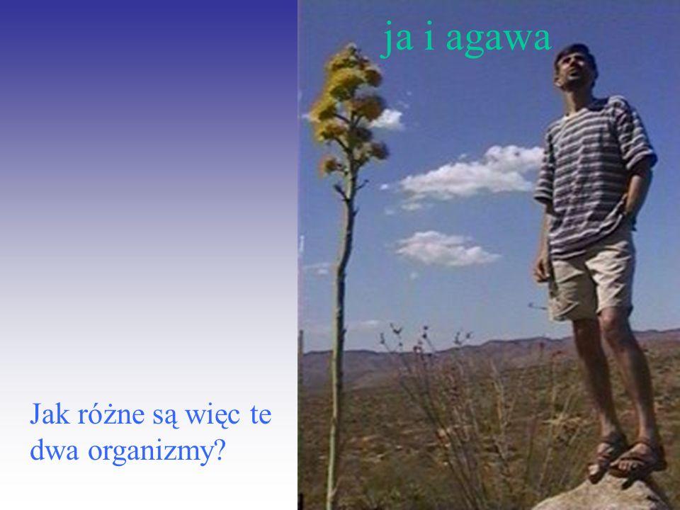 ja i agawa Jak różne są więc te dwa organizmy