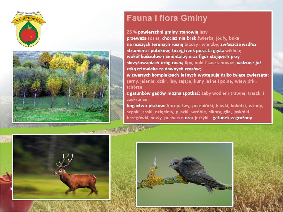 Fauna i flora Gminy 26 % powierzchni gminy stanowią lasy