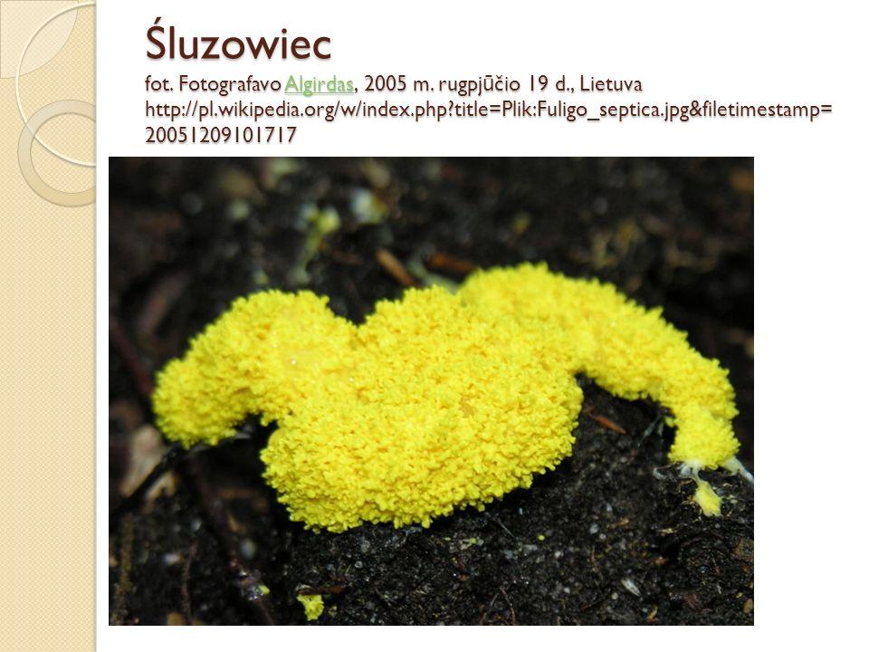 Śluzowiec fot. Fotografavo Algirdas, 2005 m. rugpjūčio 19 d