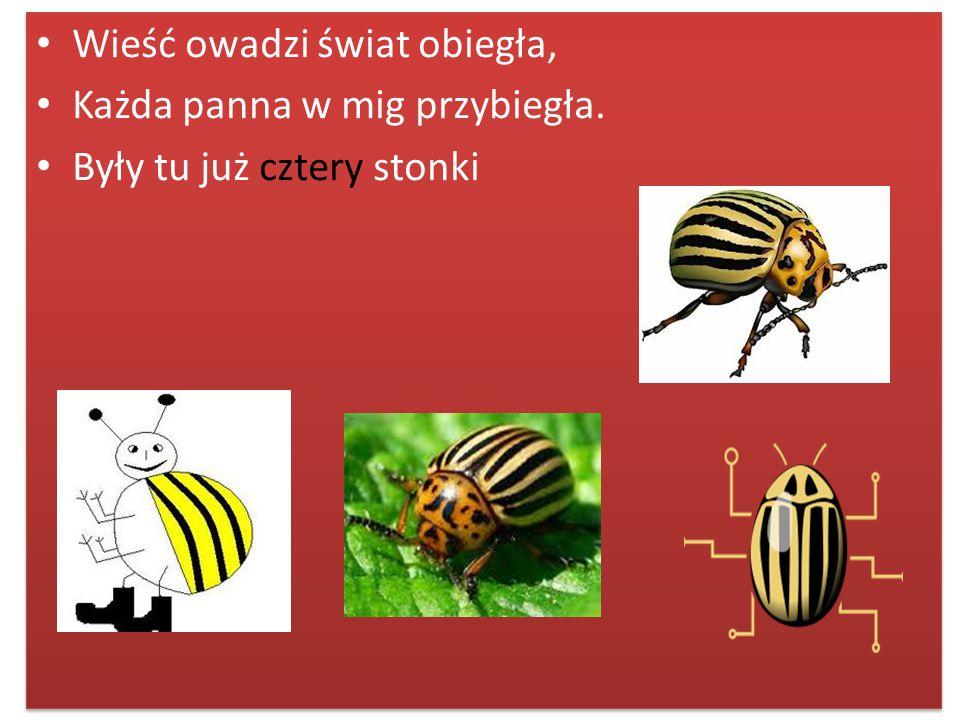 Wieść owadzi świat obiegła,