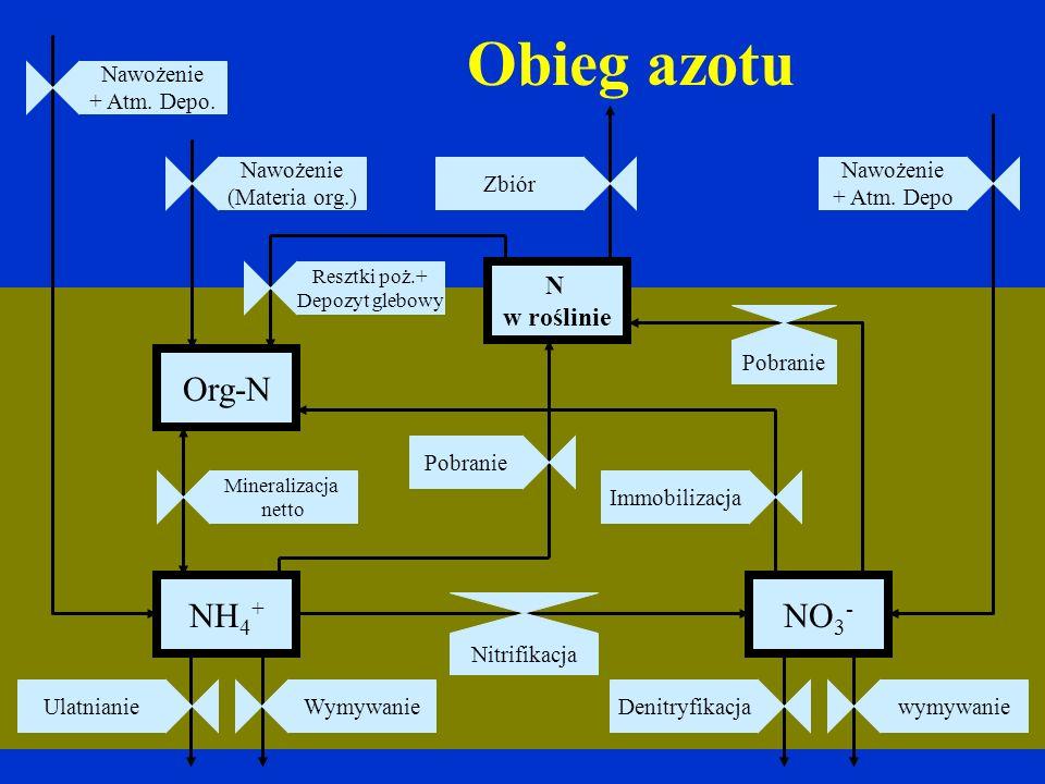 Obieg azotu Org-N NH4+ NO3- N w roślinie Nawożenie + Atm. Depo.