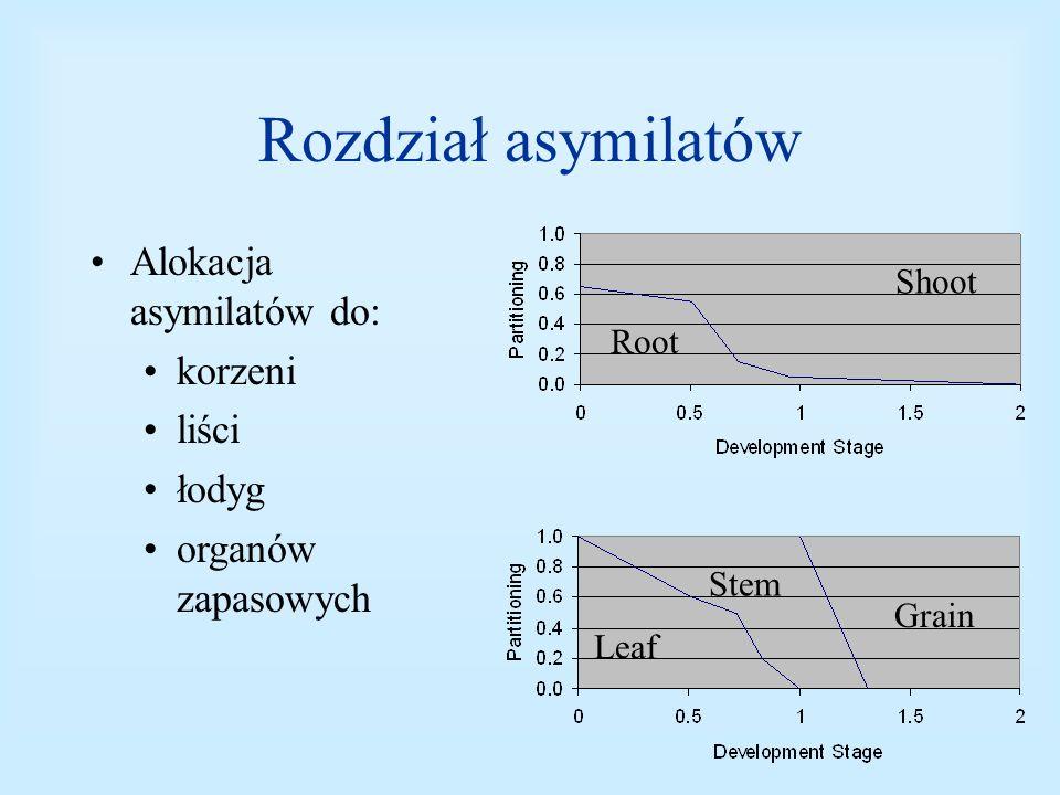 Rozdział asymilatów Alokacja asymilatów do: korzeni liści łodyg