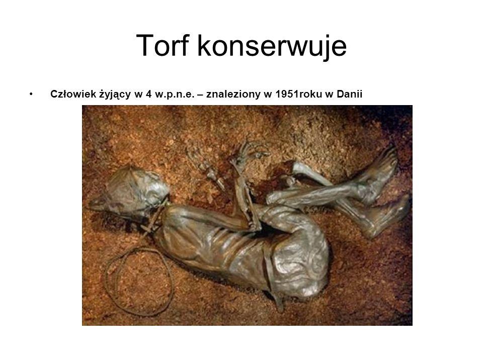 Torf konserwuje Człowiek żyjący w 4 w.p.n.e. – znaleziony w 1951roku w Danii