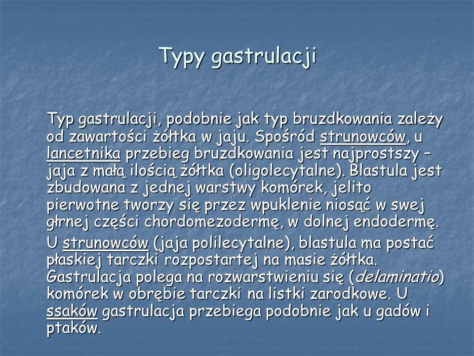 Typy gastrulacji