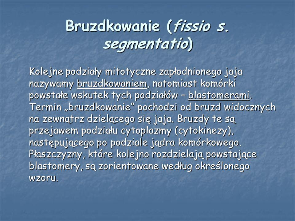 Bruzdkowanie (fissio s. segmentatio)