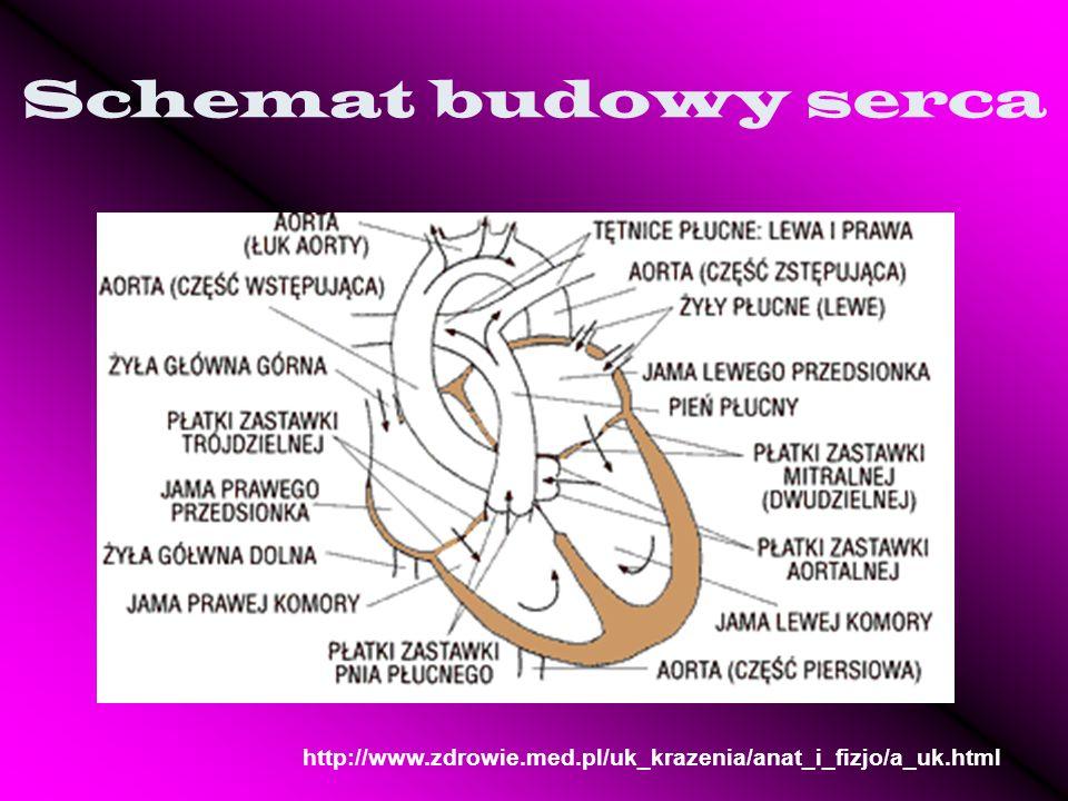 Schemat budowy serca http://www.zdrowie.med.pl/uk_krazenia/anat_i_fizjo/a_uk.html