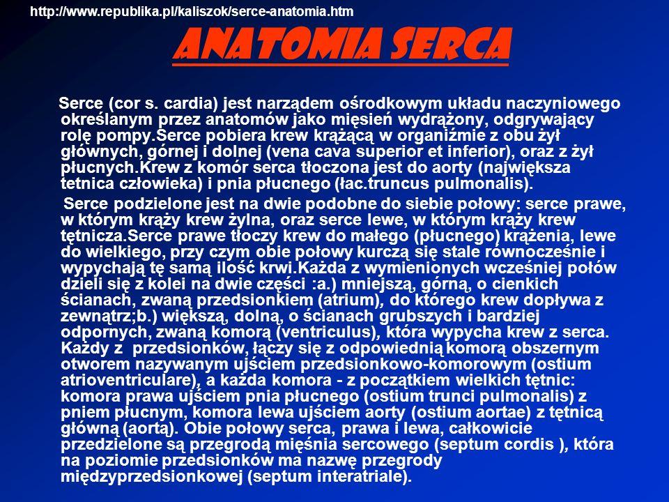 http://www.republika.pl/kaliszok/serce-anatomia.htm Anatomia serca.
