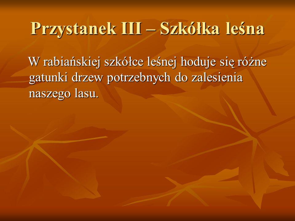 Przystanek III – Szkółka leśna