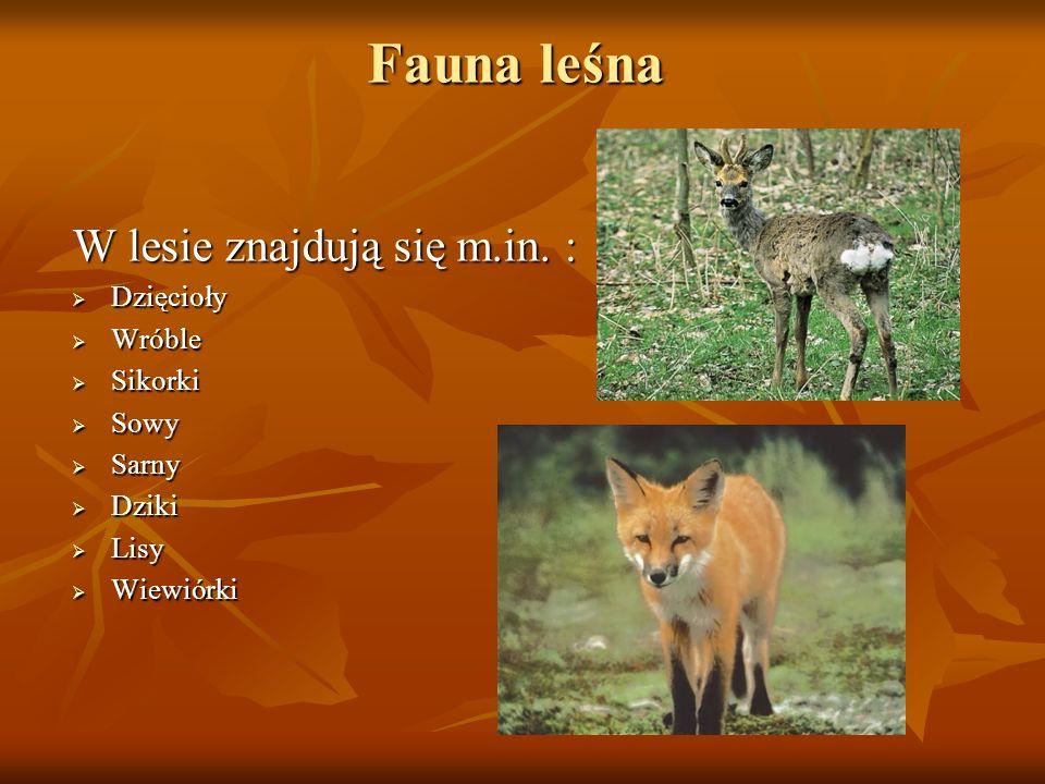 Fauna leśna W lesie znajdują się m.in. : Dzięcioły Wróble Sikorki Sowy