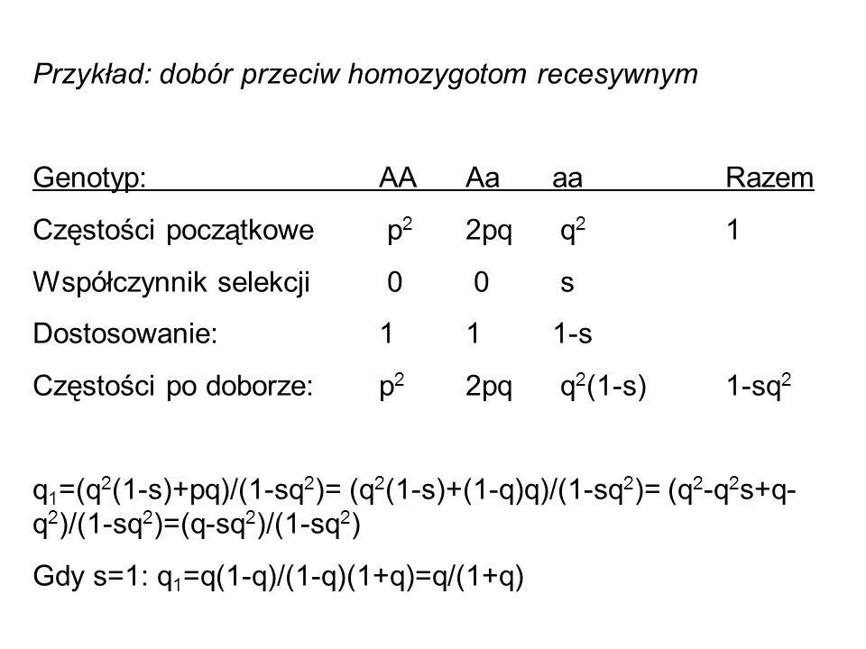 Przykład: dobór przeciw homozygotom recesywnym