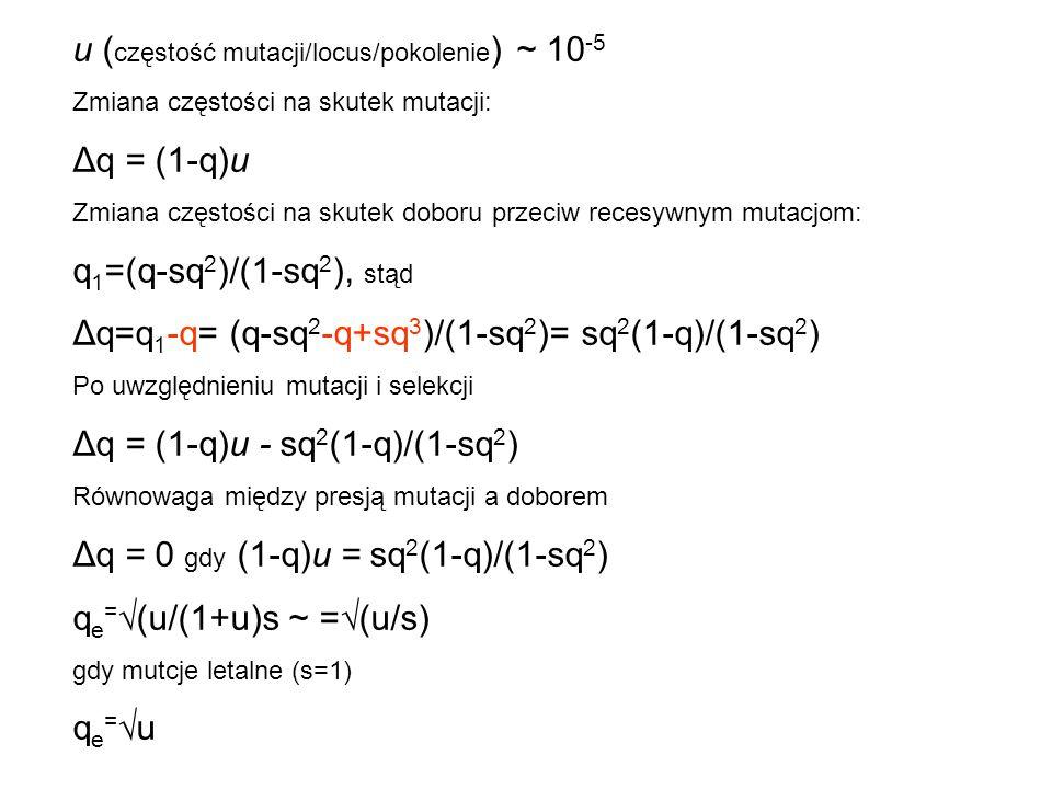 u (częstość mutacji/locus/pokolenie) ~ 10-5 Δq = (1-q)u