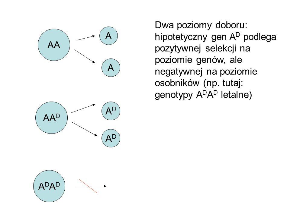 Dwa poziomy doboru: hipotetyczny gen AD podlega pozytywnej selekcji na poziomie genów, ale negatywnej na poziomie osobników (np. tutaj: genotypy ADAD letalne)