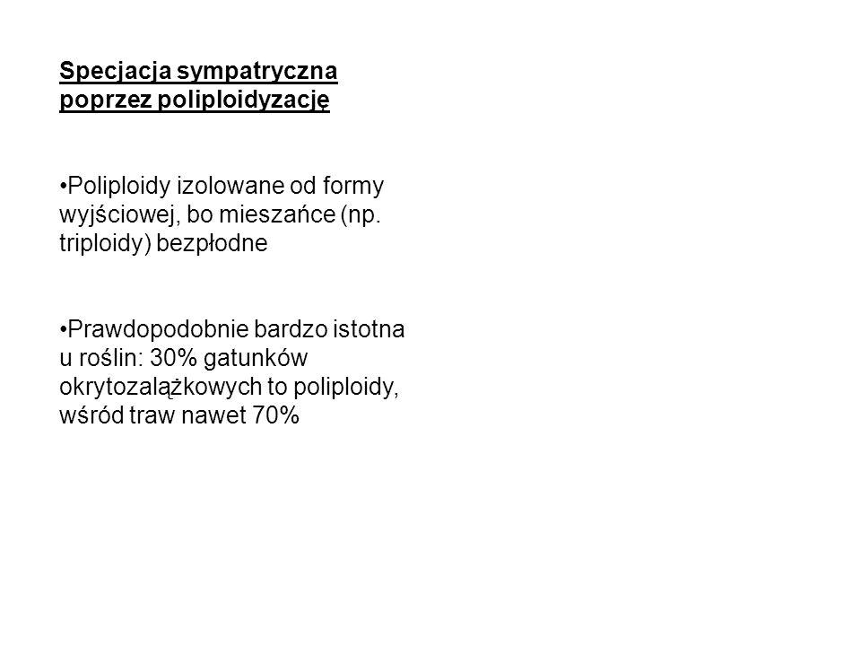 Specjacja sympatryczna poprzez poliploidyzację