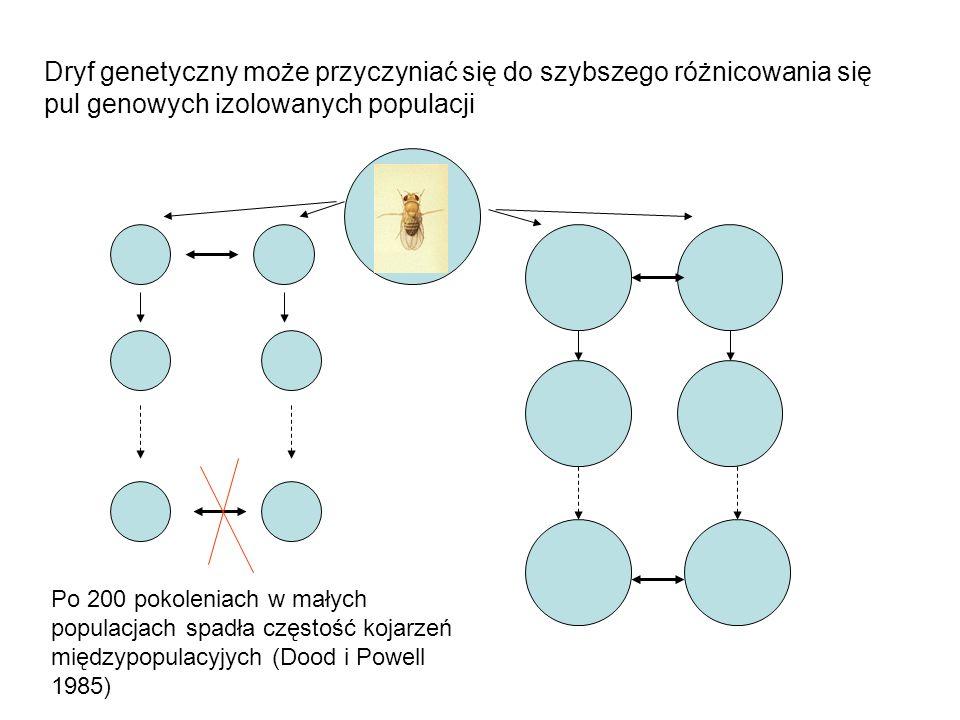 Dryf genetyczny może przyczyniać się do szybszego różnicowania się pul genowych izolowanych populacji