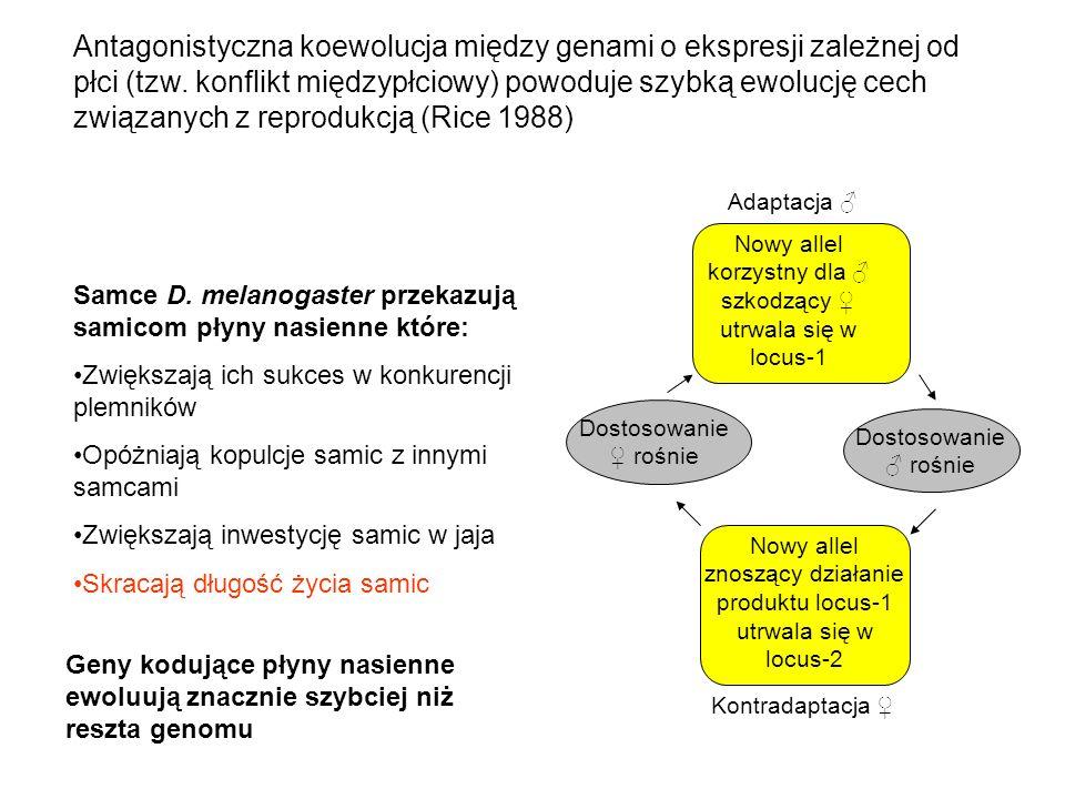 Antagonistyczna koewolucja między genami o ekspresji zależnej od płci (tzw. konflikt międzypłciowy) powoduje szybką ewolucję cech związanych z reprodukcją (Rice 1988)