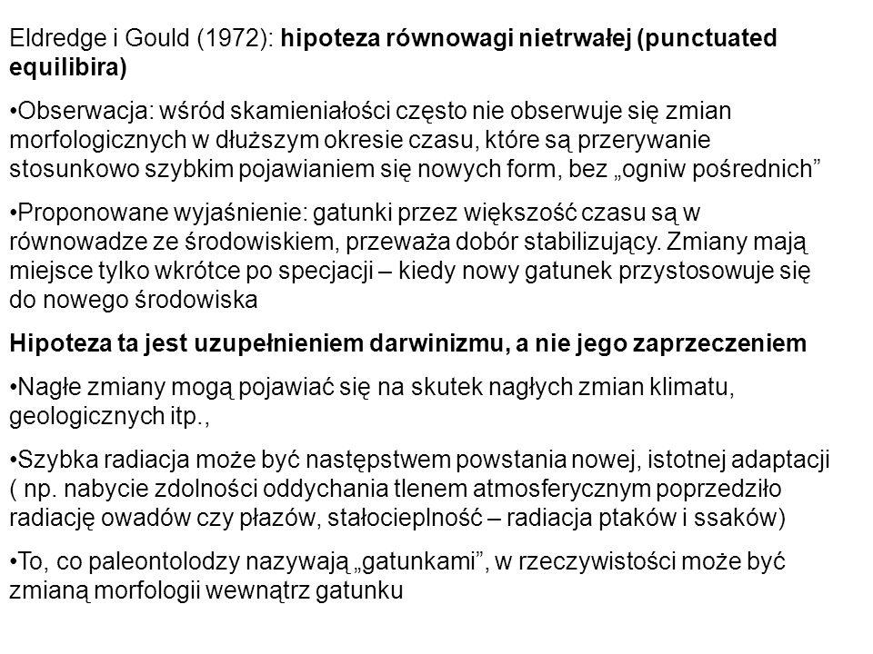Eldredge i Gould (1972): hipoteza równowagi nietrwałej (punctuated equilibira)