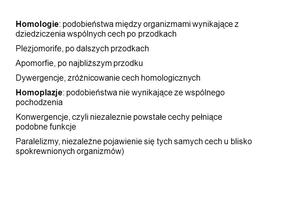 Homologie: podobieństwa między organizmami wynikające z dziedziczenia wspólnych cech po przodkach