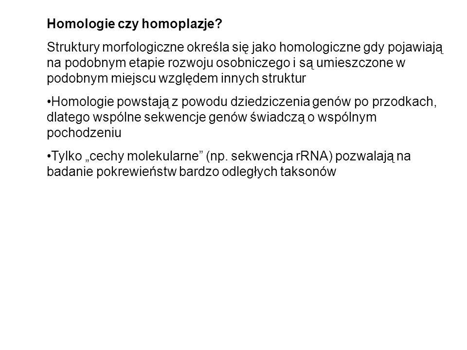 Homologie czy homoplazje