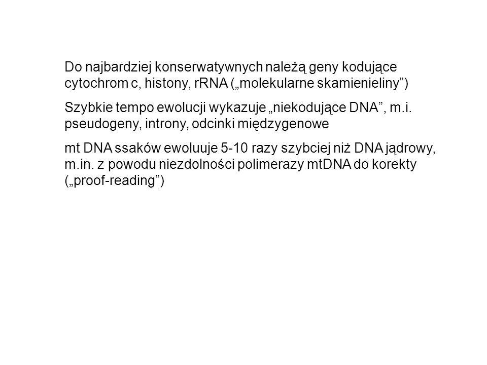 """Do najbardziej konserwatywnych należą geny kodujące cytochrom c, histony, rRNA (""""molekularne skamienieliny )"""