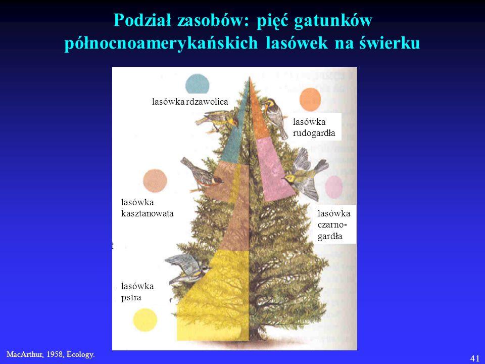Podział zasobów: pięć gatunków północnoamerykańskich lasówek na świerku