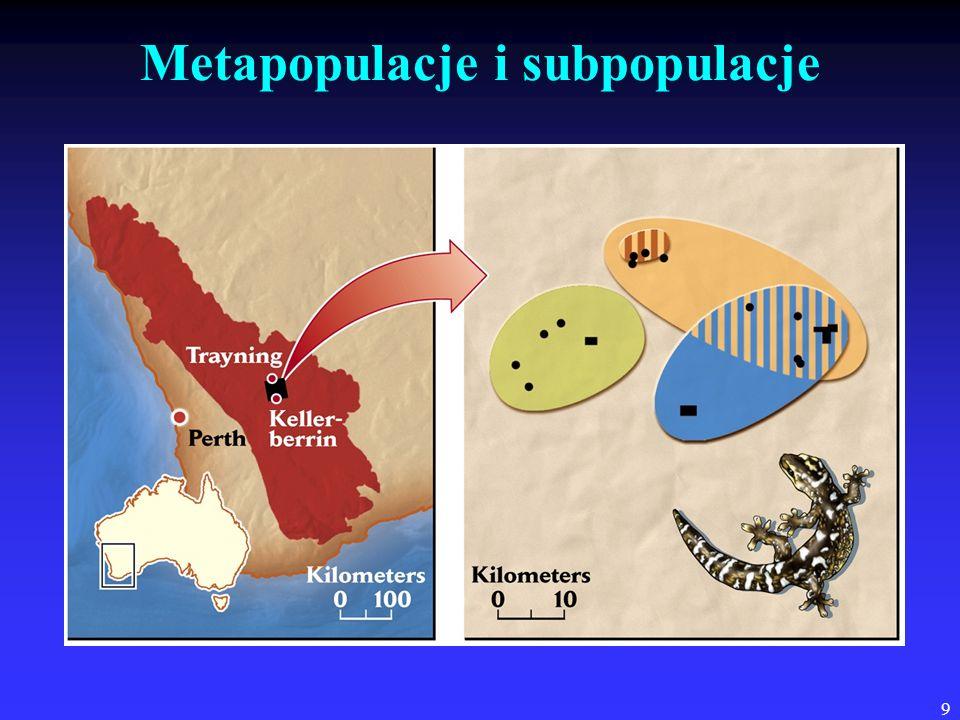 Metapopulacje i subpopulacje