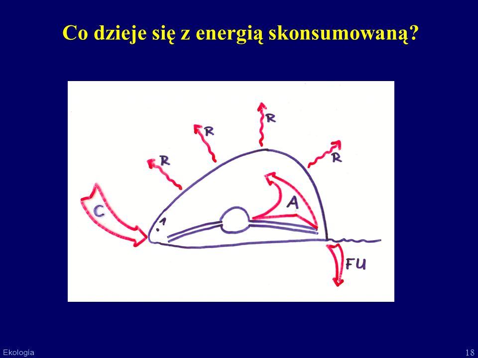 Co dzieje się z energią skonsumowaną