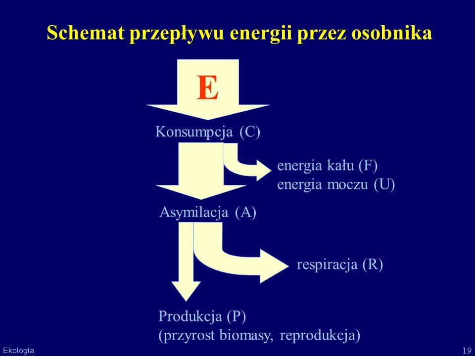 Schemat przepływu energii przez osobnika